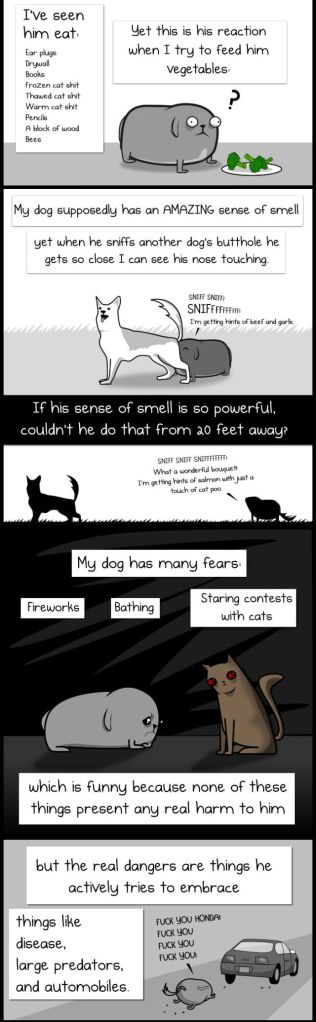 My Dog the Paradox5